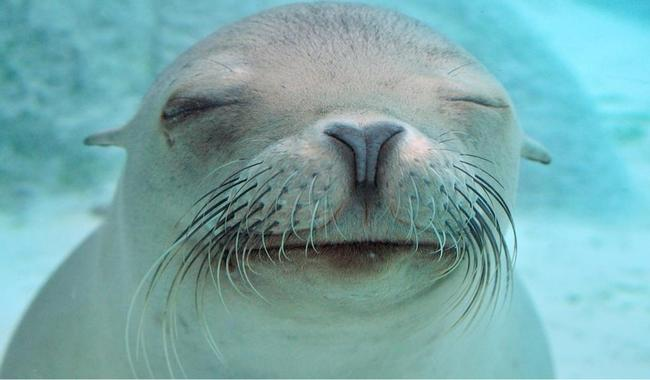 closed-eye-seal-funny-facebook-timeline-cover,1024x600,66221